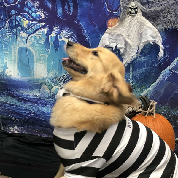 Halloween Party at Dogtopia of Yorktown