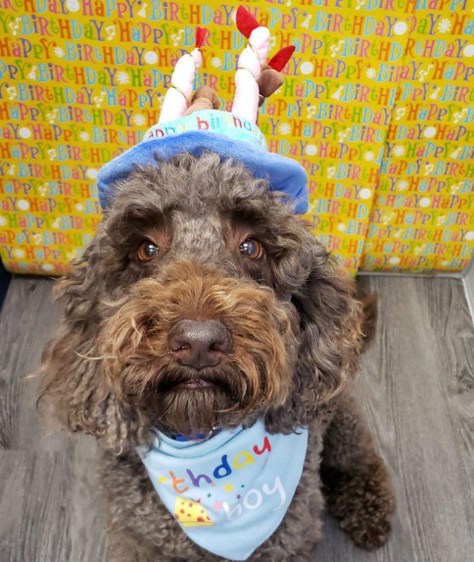 Louie's Birthday Party
