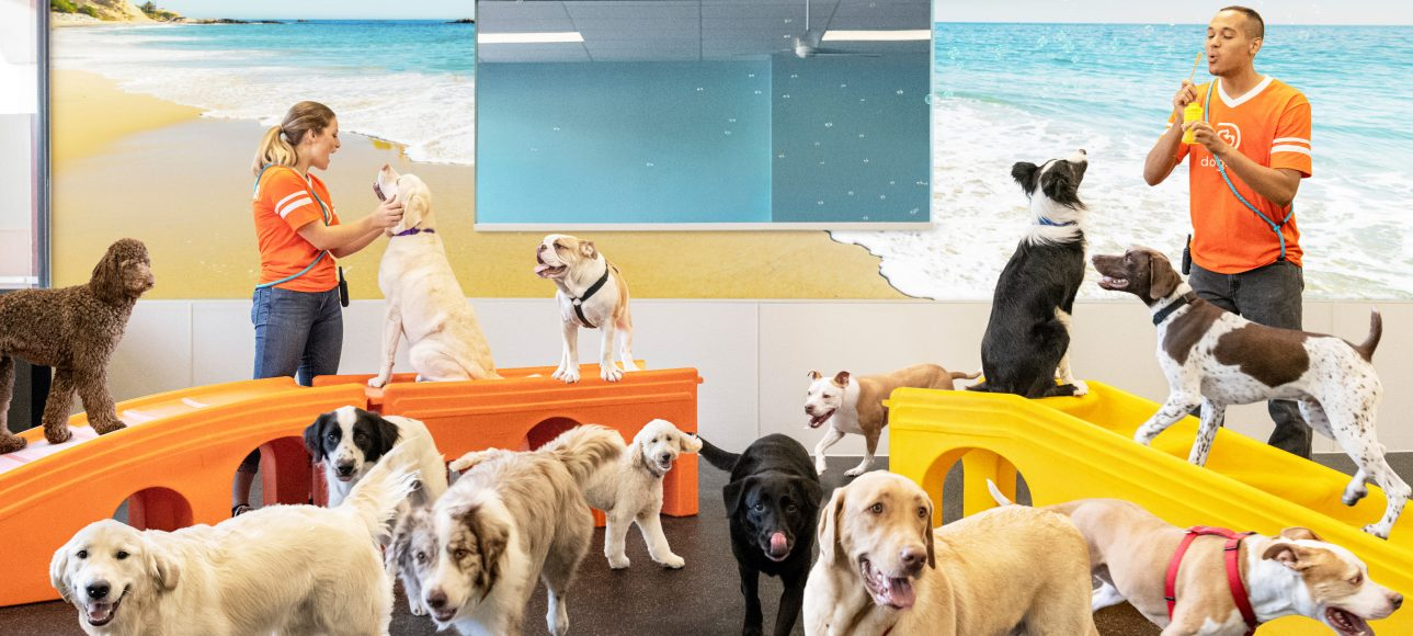 Dog daycare referral program