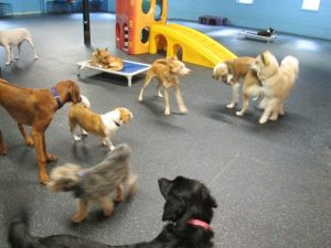 Playtime at Dogtopia