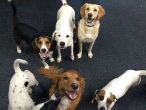 Happy group of dogs