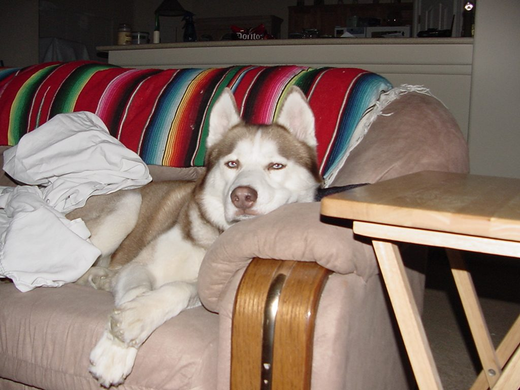 NANOOK-CHILLING-ON-COUCH