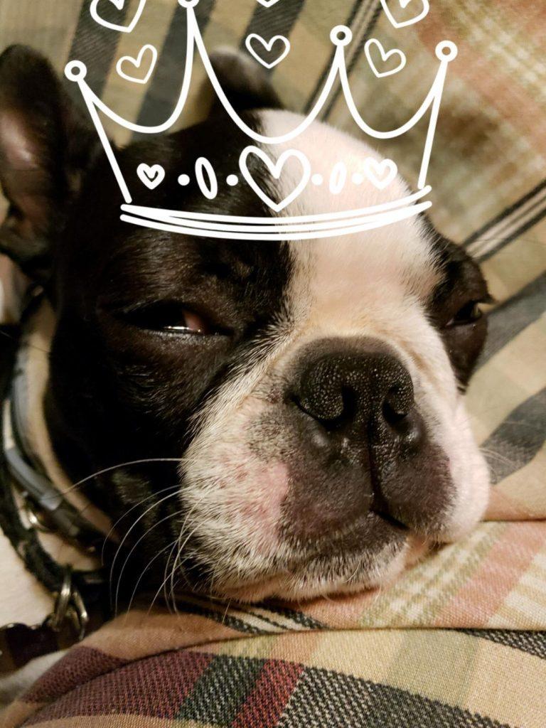 Rosie-the-puppy-princess