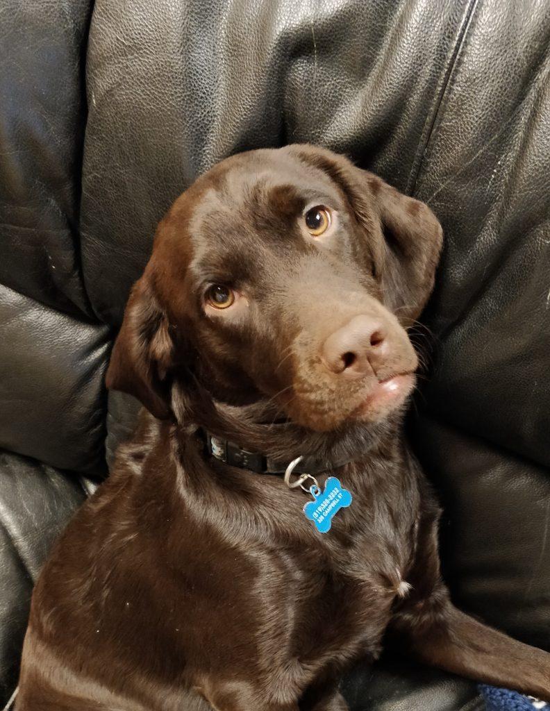 dog-2019-11-09-21.15.16
