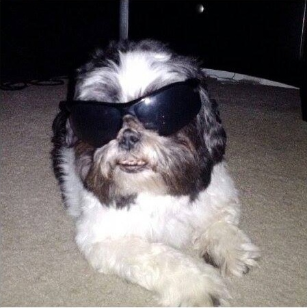 tyson-with-shades