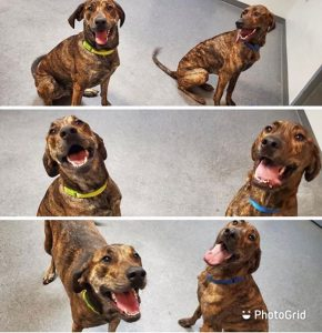 Dog Brothers Reunited at Dogtopia Daycare