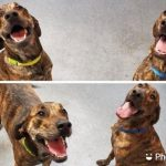 Brothers Rocky and Milo were reunited at dog daycare