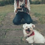 how to take photos of dogs - Photo by Treddy Chen on Unsplash