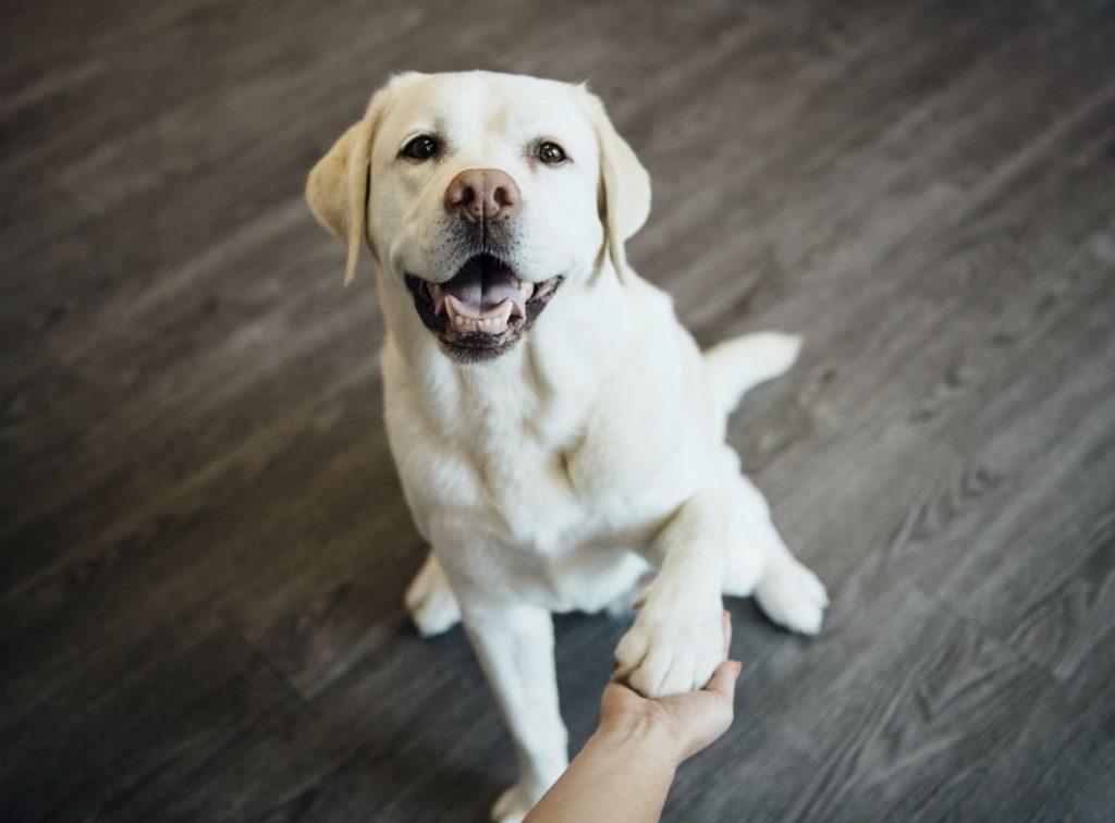 heartwarming dog stories