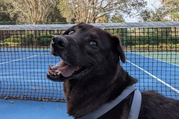 Jenga shelter dog adopted