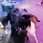 dogtopiasouthsummerlin