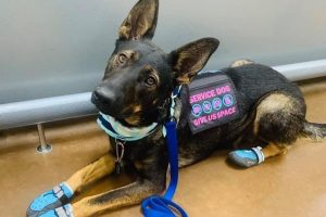 Willow the service dog