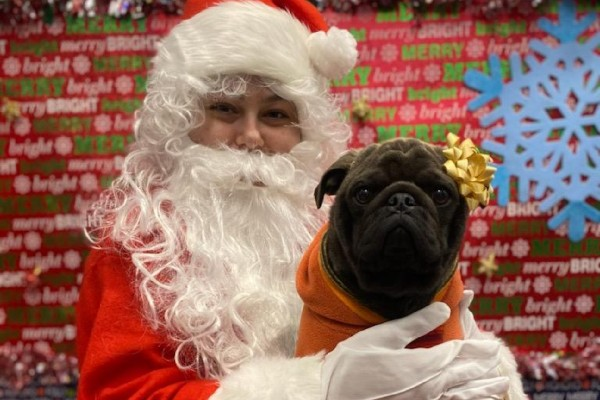 Santa holding a bulldog