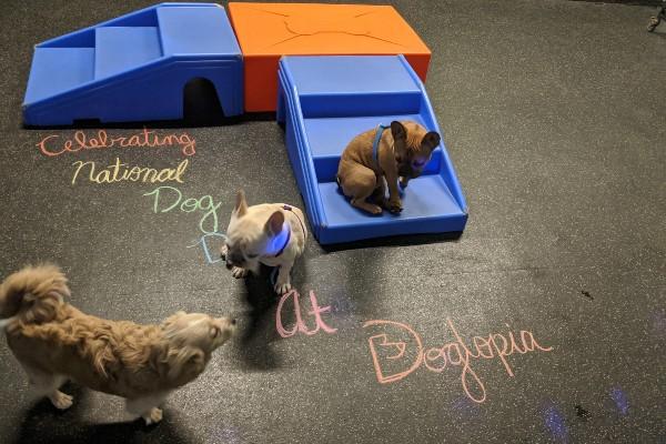 3 dogs playing on plastic bridge
