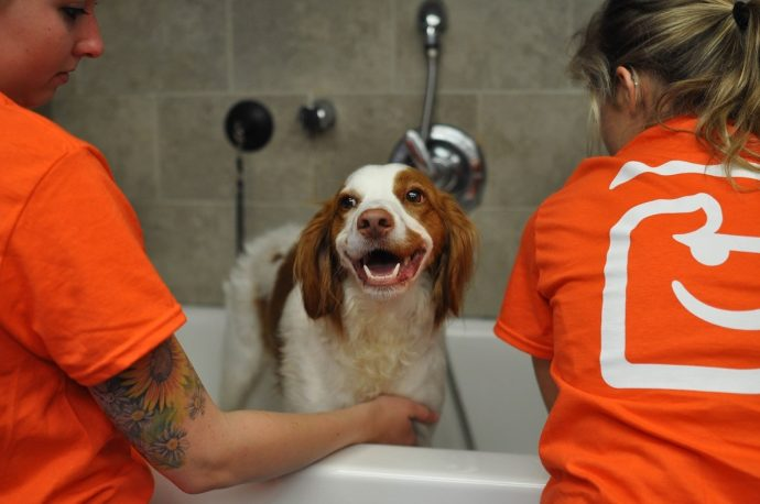 One Of Our Four-Legged Clients Enjoying A Bath.