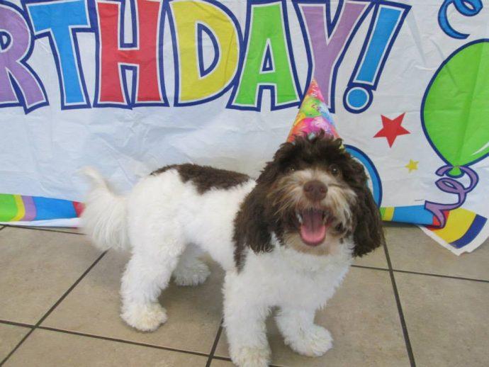 CJ Havanese, Monthly Birthday Party