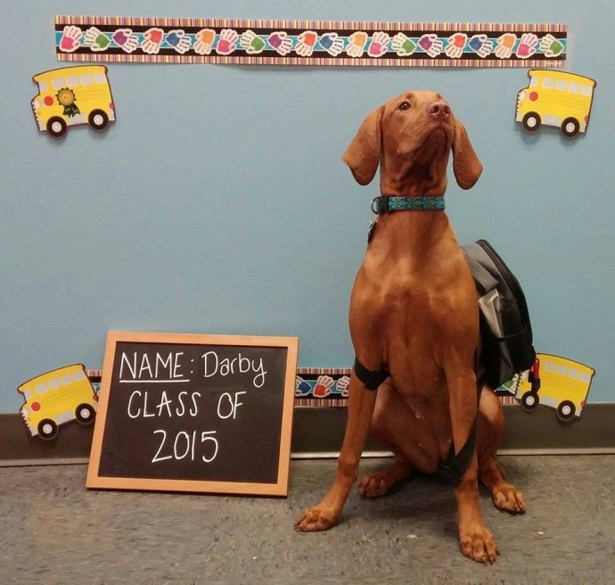 Darby Vizsla, Bark to School