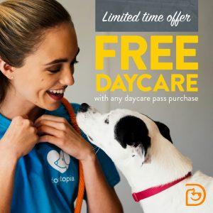 Charlotte dog daycare pass sale