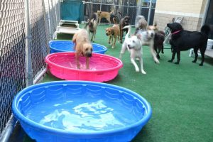 Tucker, being chased by Shane and Chewy through the pools