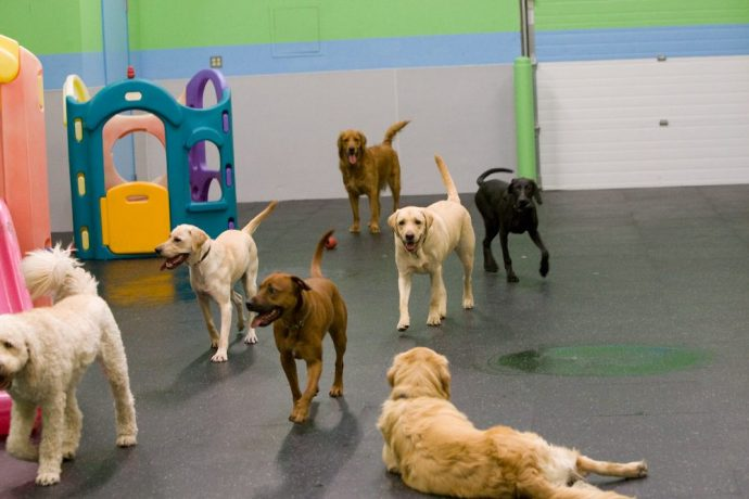 Active Pups Tn The Gym Playroom