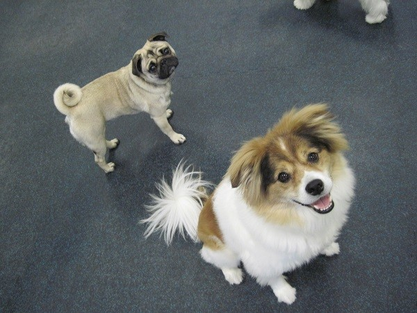 Dogs Posing For A Picture