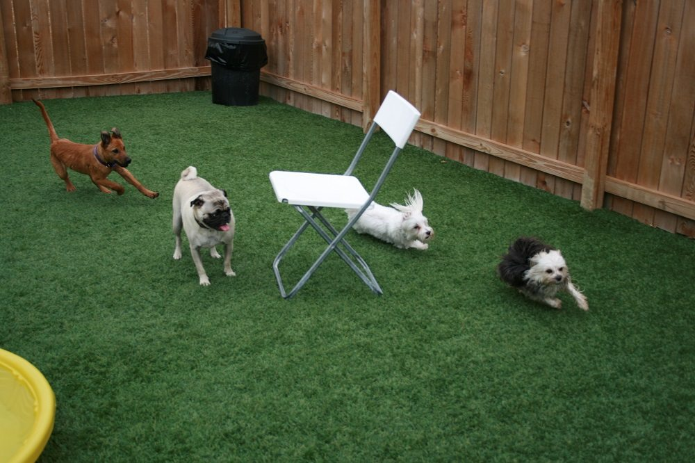 Dogs Running In The Backyard